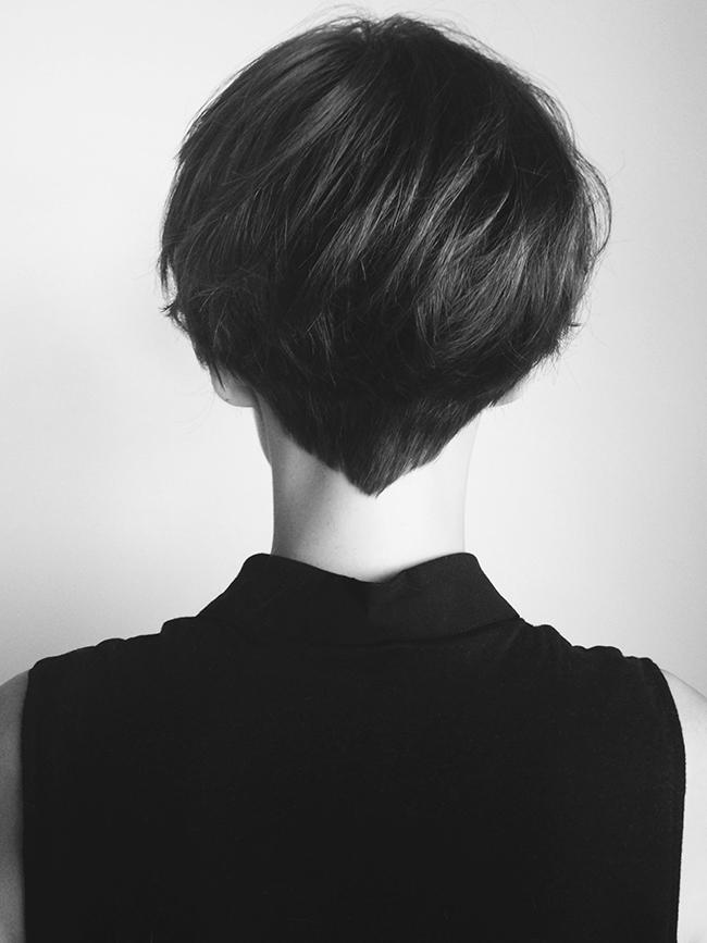 Kate-Miss-shorthair