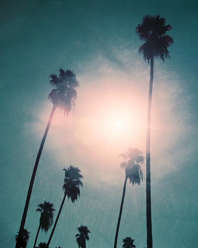 KateMiss-Palms